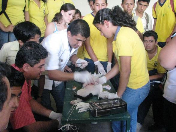 Estudiantes aprenden sobre cirugías menores en animales