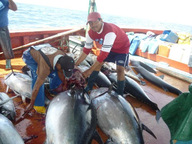 Censo desnuda realidad del pescador artesanal