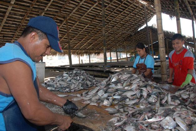 Las vedas afectan a los pescadores pero ayudan a preservar especies