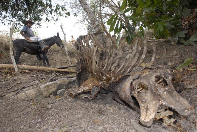 Sequía crítica montaña adentro
