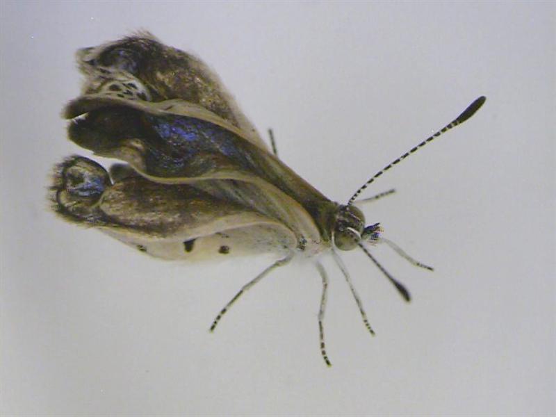 Radiación en Fukushima provocó mutación en mariposas