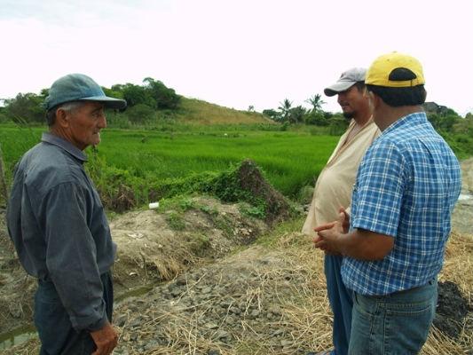 Plaga de caracoles ataca a los cultivos de arroz en el valle del río Portoviejo
