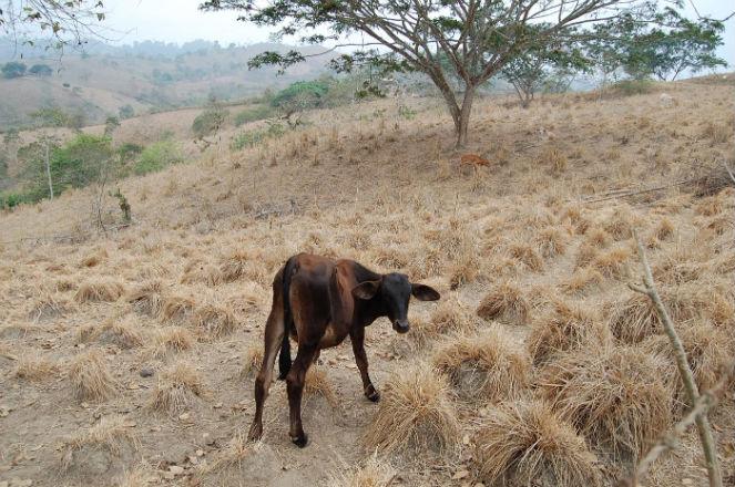 La gente sigue clamando por ayuda para enfrentar estragos de la sequía