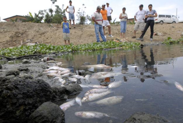 Ministerio del Ambiente  investiga muerte de peces