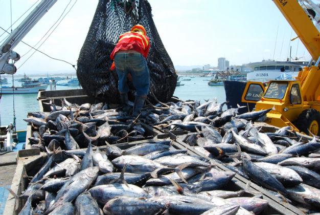 Certificarán la pesca del barrilete