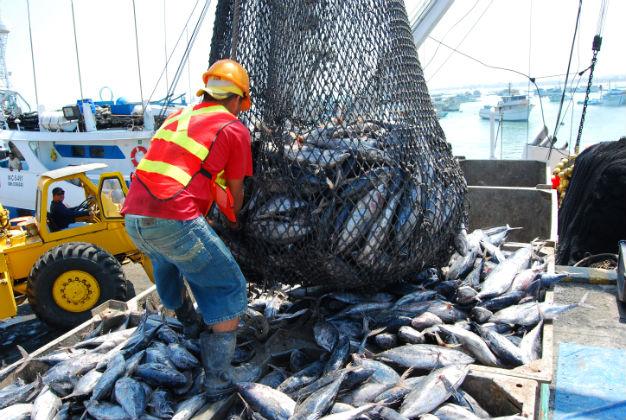 La pesca del atún decayó en el  año 2009