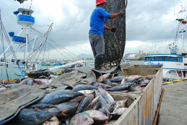 Atuneras en aprietos, hay poca pesca