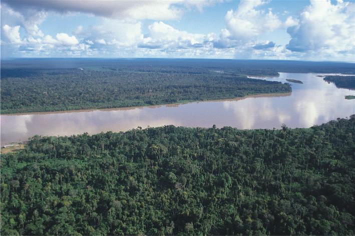 Hasta 18 000 millones de dólares para frenar deforestación de Amazonía
