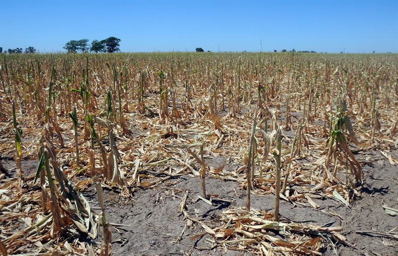 Argentina padece una agobiante ola de calor en medio de sequía
