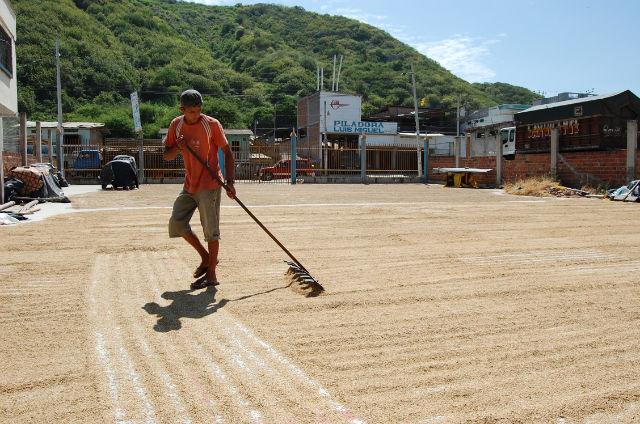 BNF apoyará en venta  de arroz para Venezuela