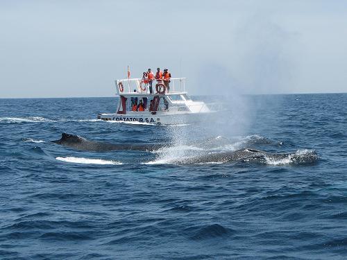 Feria en Salango para recibir a las ballenas y turistas