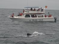 Enojo por inasistencia a feria de la ballena