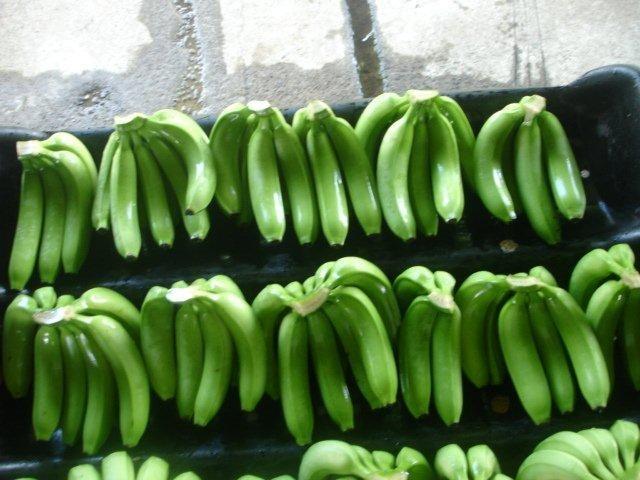 En 5,50 dólares se fijó el precio de la caja de banano