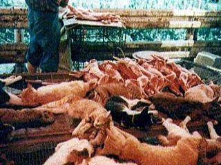 INSÓLITO: en Brasil detienen a dueños de un camal de perros y gatos
