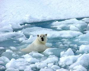 """Cambio climático: """"mayor reto del siglo XXI"""", también para los medios"""