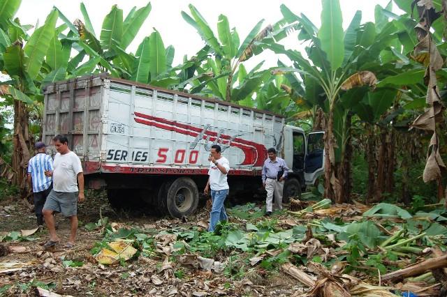 En una platanera abandonaron un camión robado