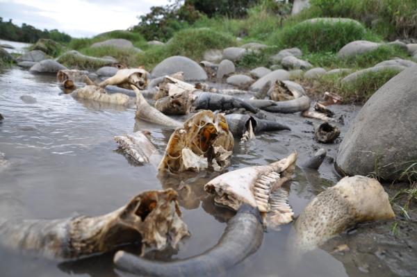 Huesos, químicos, aguas servidas y basura contaminan los ríos