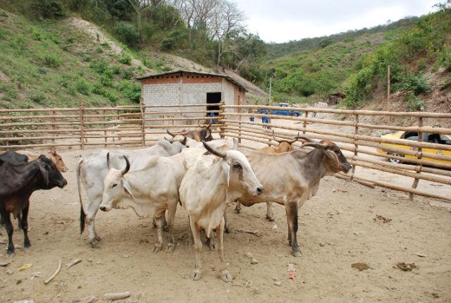 El Carmen ya puede comercializar ganado