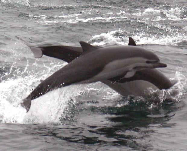 Ecuador con menos delfines