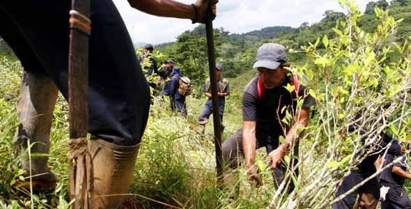 Correa asegura que Ecuador es el 'único' país andino sin cultivos de droga