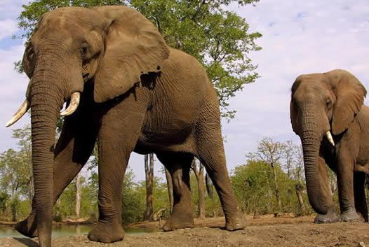 Dos elefantes matan a tres personas en la India