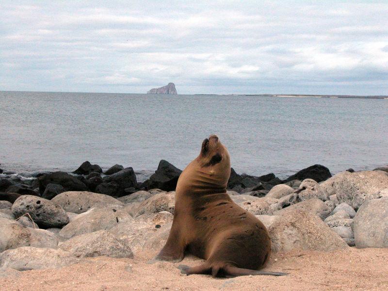 Galápagos, declaradas 'Mejor isla en el mundo'