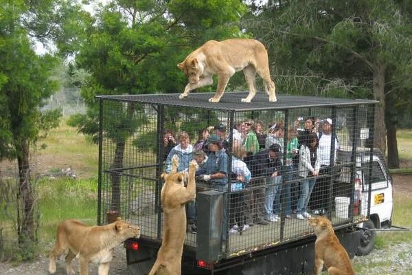Zoológico encierra a personas y libera a los animales