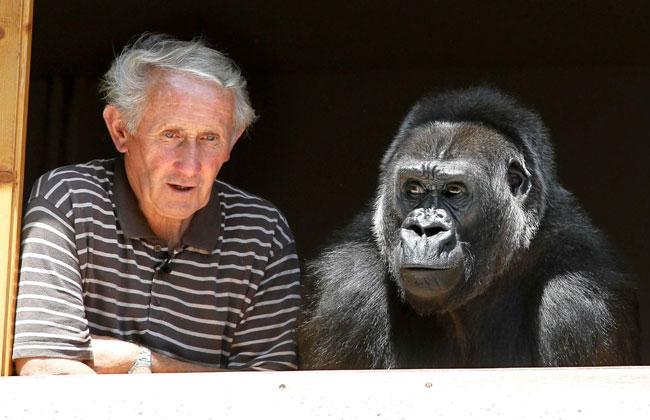 Pareja de franceses adoptó a un gorila hace trece años