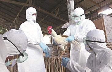 China sacrifica aves por gripe aviar