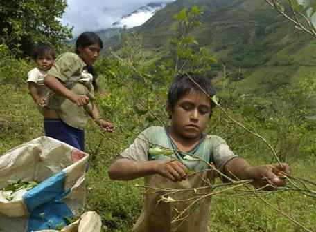Perú quita a Colombia liderazgo de producción de coca