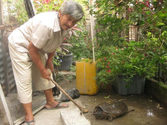 Hallan tortuga en el río Burro