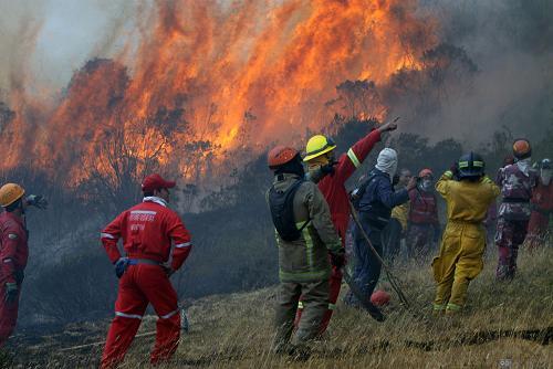 Ministra asegura que incendios han quemado 9.000 hectáreas