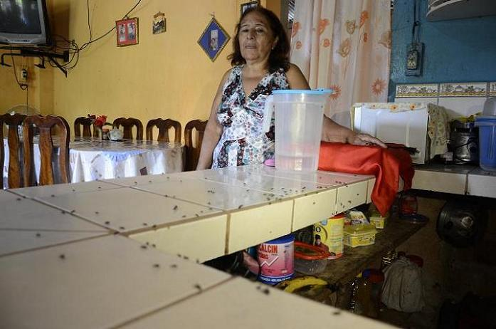 Las moscas invanden el sector Las Piedras