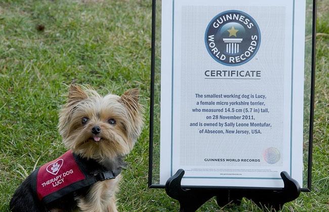 'Lucy' ostenta el récord de ser la perra más pequeña