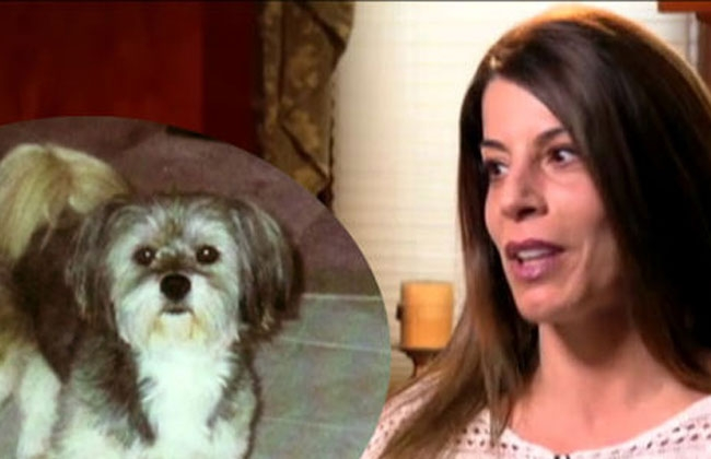 Pagó cincuenta mil dólares para clonar a su perro