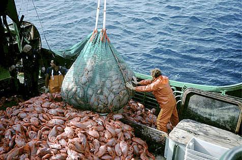 Detienen barco con más de 600 toneladas de pesca ilegal el Galápagos
