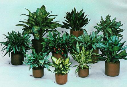 Aseguran que planta de jard n es venenosa el diario ecuador for Matas de jardin