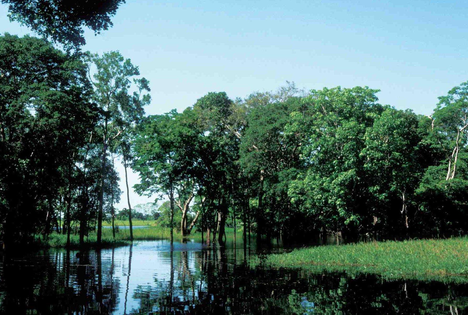 EE.UU. quiere conservar  la Amazonía de Ecuador