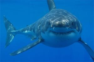 Técnicas para la conservación de tiburones se analizan en taller en Manta