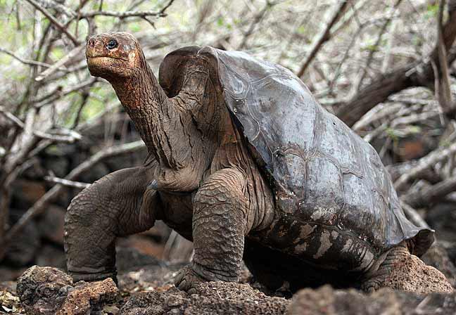 Hallan indicios genéticos de tortugas que se creían extintas