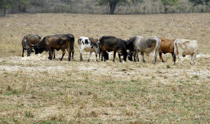 Aún no llegan recursos económicos  para enfrentar la sequía en Manabí
