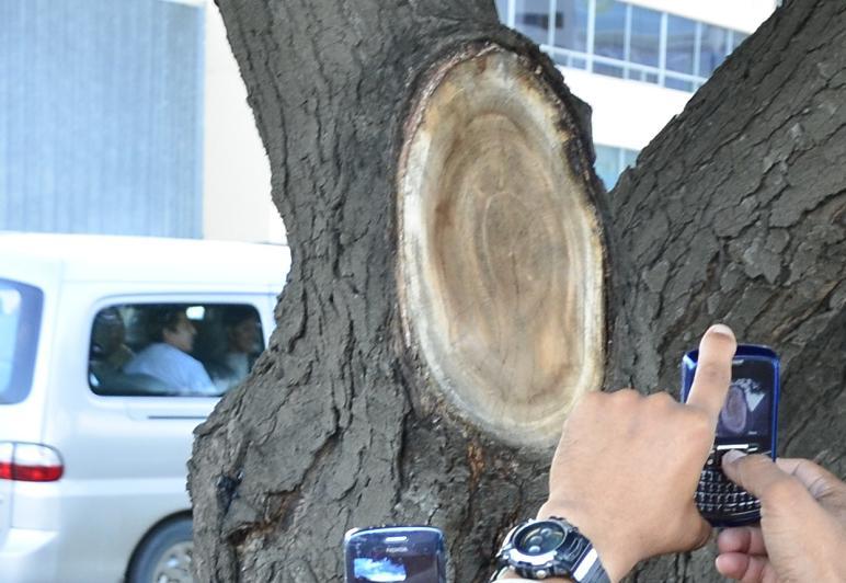 Descubren supuesta imagen de la Virgen en un árbol
