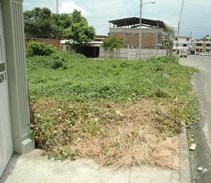 Dueños de terrenos baldíos deben darle mantenimiento