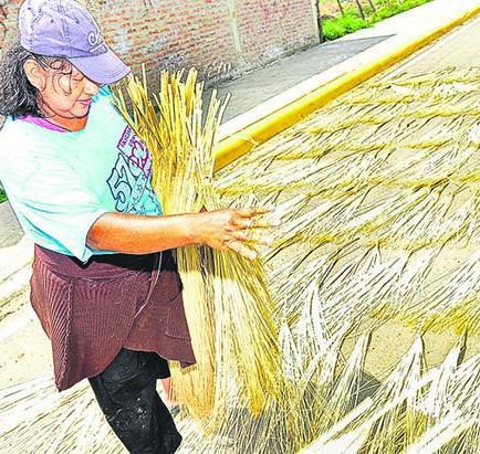 20 familias secan la paja toquilla