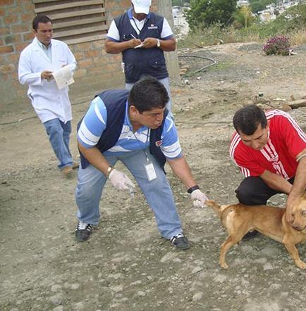 Prevén vacunar a 7.700 canes y gatos