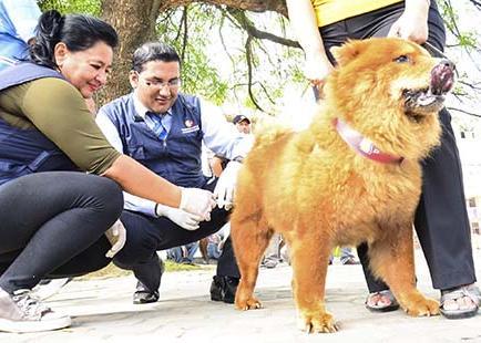 Proyectan vacunar a 39.700 perros contra  la rabia en el cantón