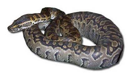 Mueren dos niños estrangulados por una serpiente pitón