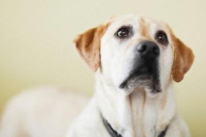 Hombre hizo explotar a su perra porque creía que estaba poseída