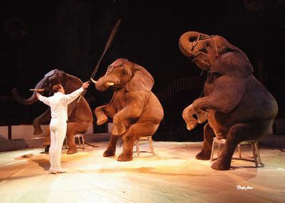 El Salvador prohíbe la utilización de animales en los circos