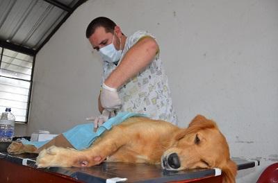 89 mascotas fueron esterilizadas